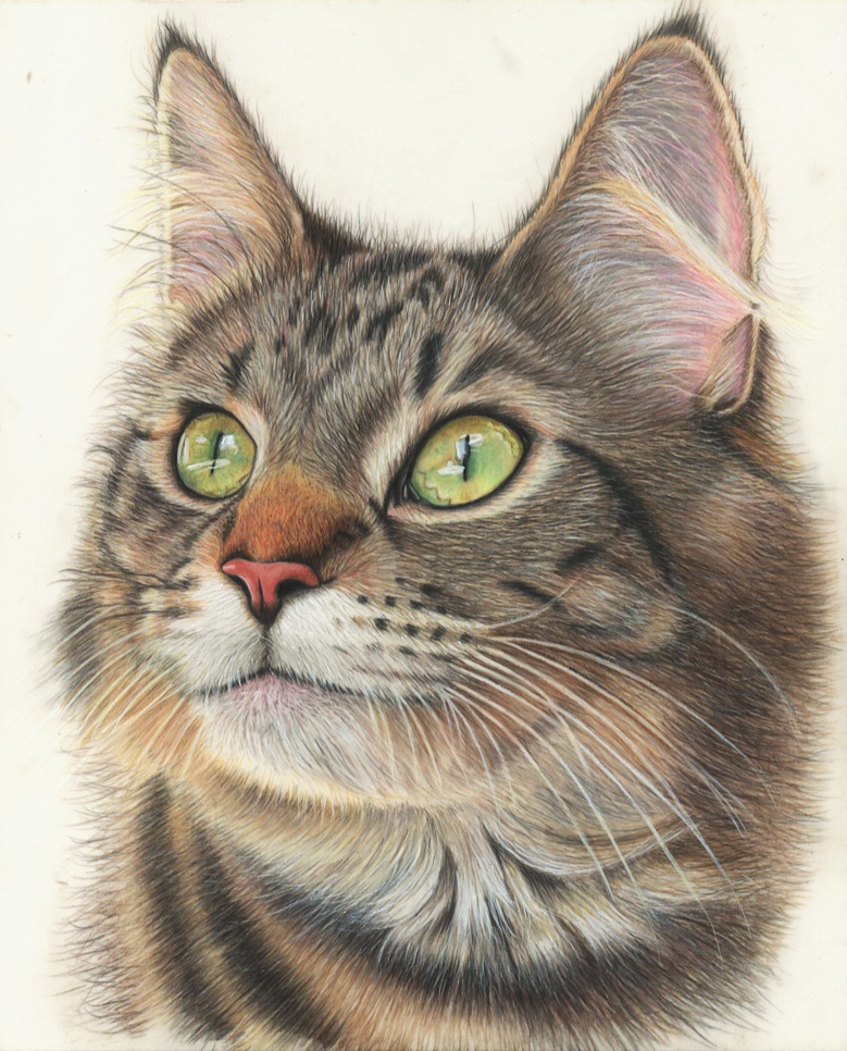 Realism color pencil drawing - Tilly and Blue International